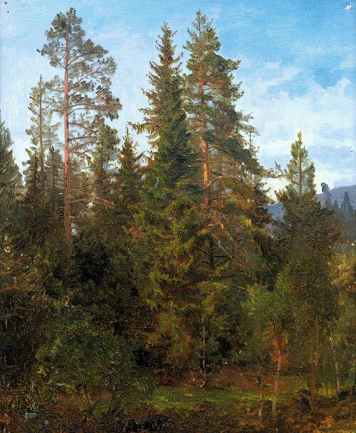 Skogsstudie fra Eide 1868