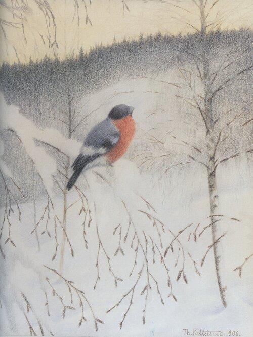 Dompap på rimet kvist (Vintermorgen) 1906