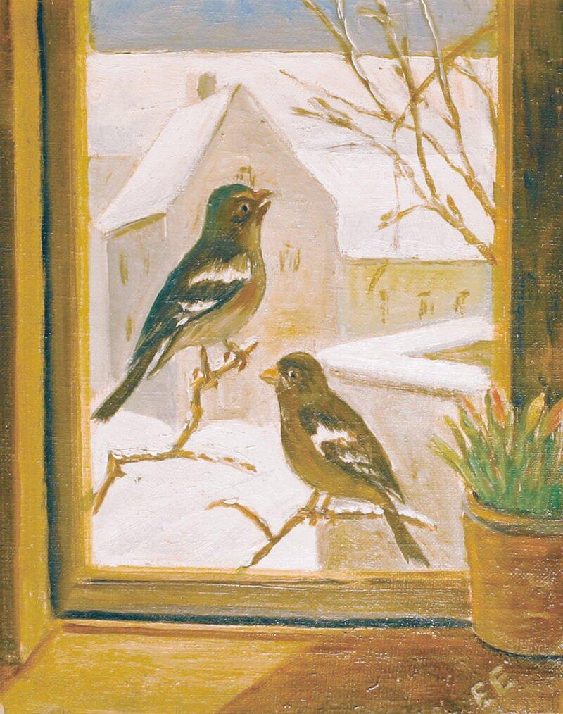 Bokfinker på gren utenfor vindu, vinter