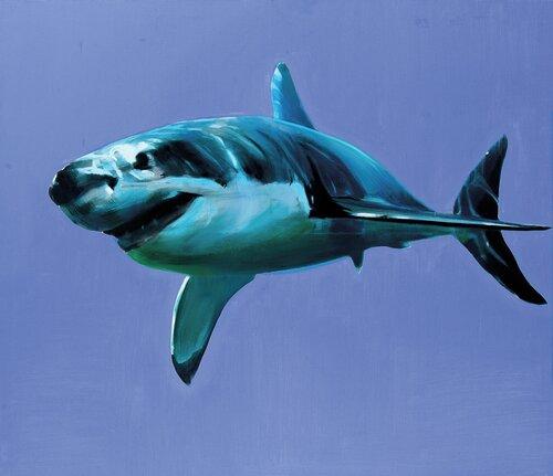 Shark 2008