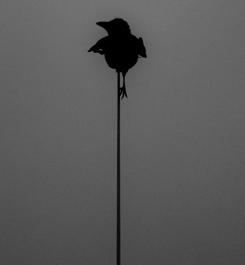 Uten tittel (Fugl på mast I)