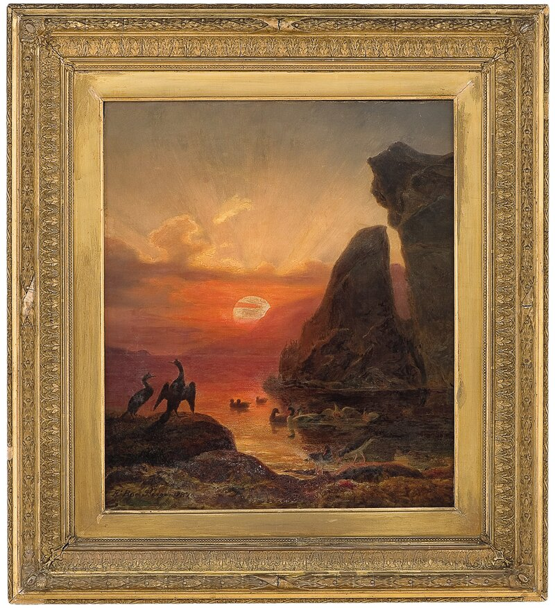 Sjøfugler i midnattsol 1876