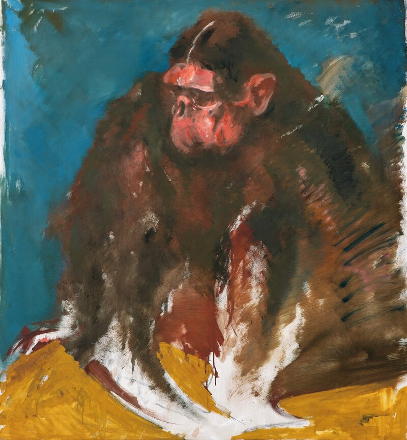 Blågul ape