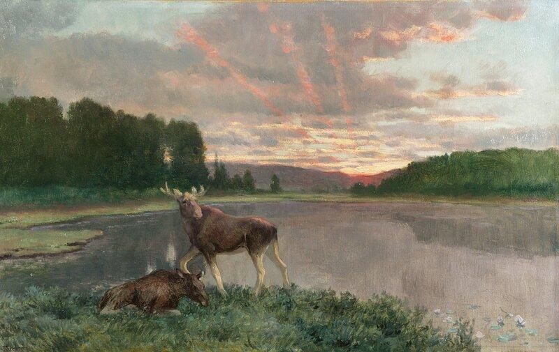 Elg i solrenningen