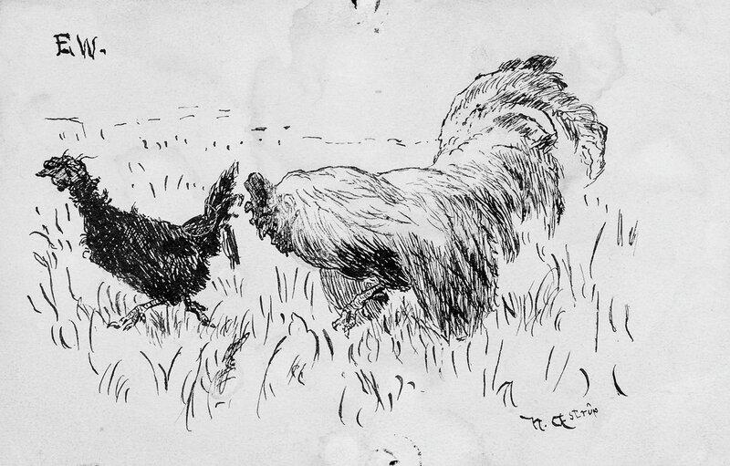 Høne og hane