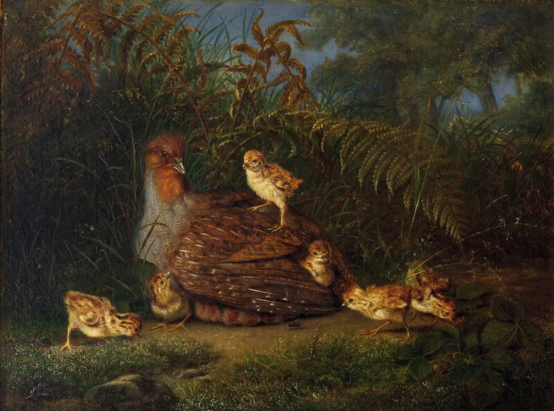 Rapphøne med kyllinger 1862