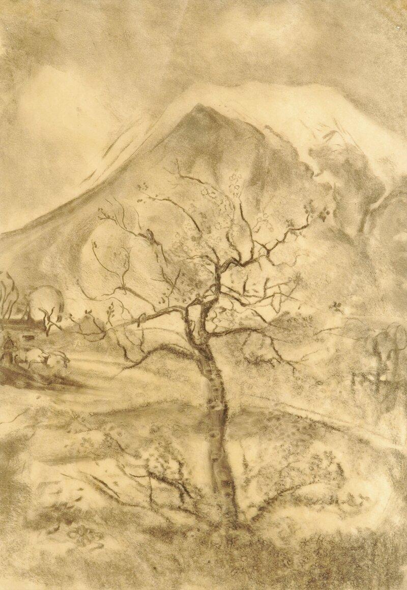 Kirsebærtre mot snedekte fjell