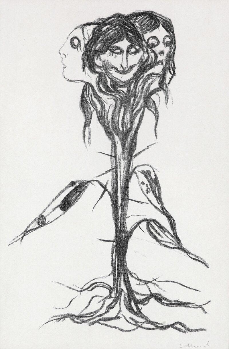 Vignett: Amaryllis