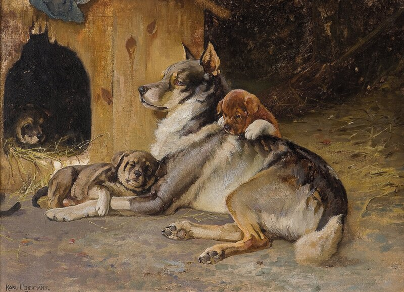 Elghund med valper 1894