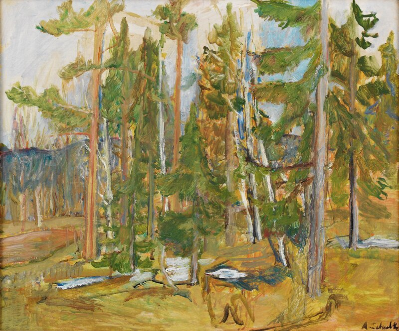 Skogslandskap