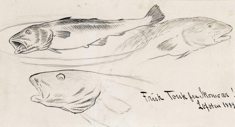 Frisk torsk fra Skomvær 1889
