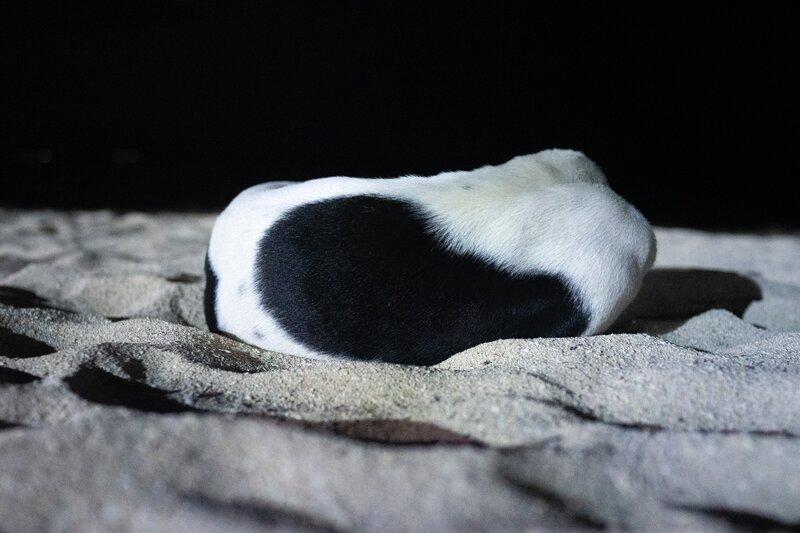 Dog in Dark