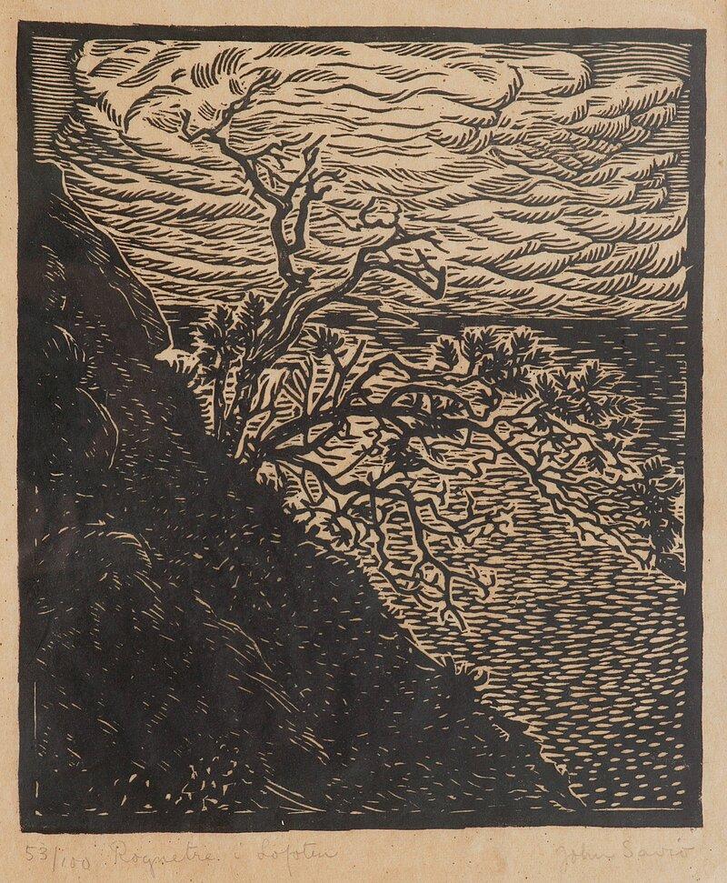 Rognetre i Lofoten
