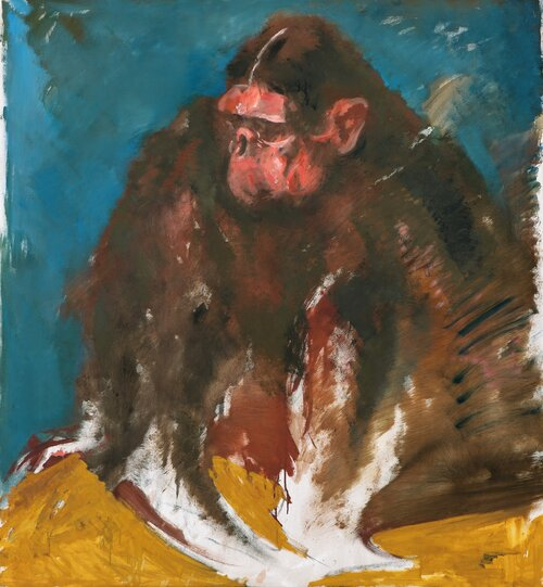 Blue-yellow Ape