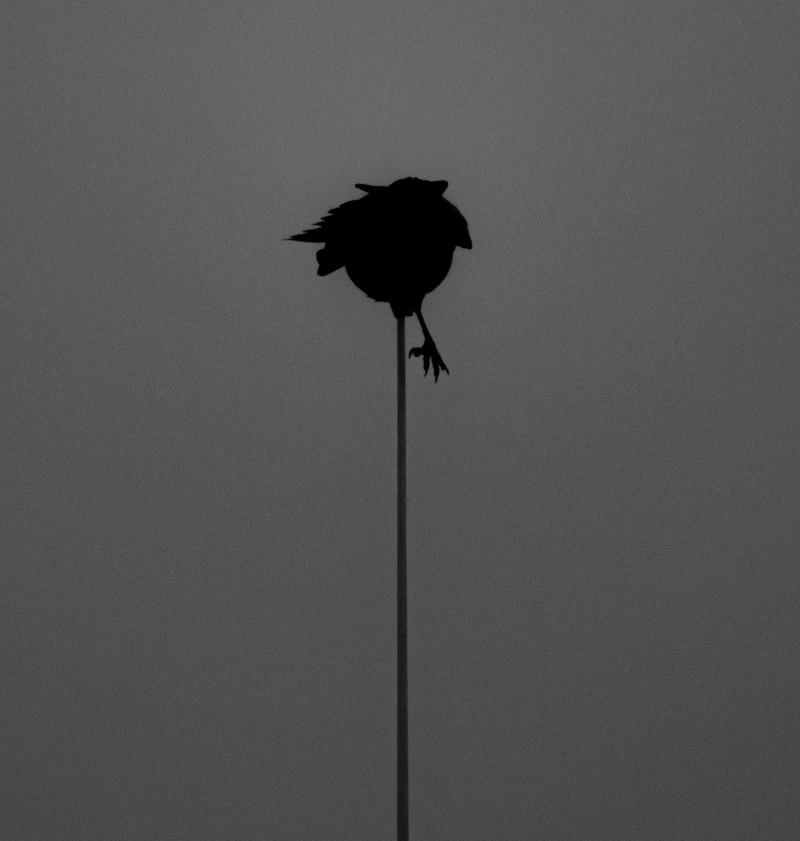 Uten tittel (Fugl på mast II)