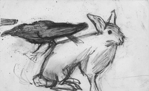 Kråke og hare