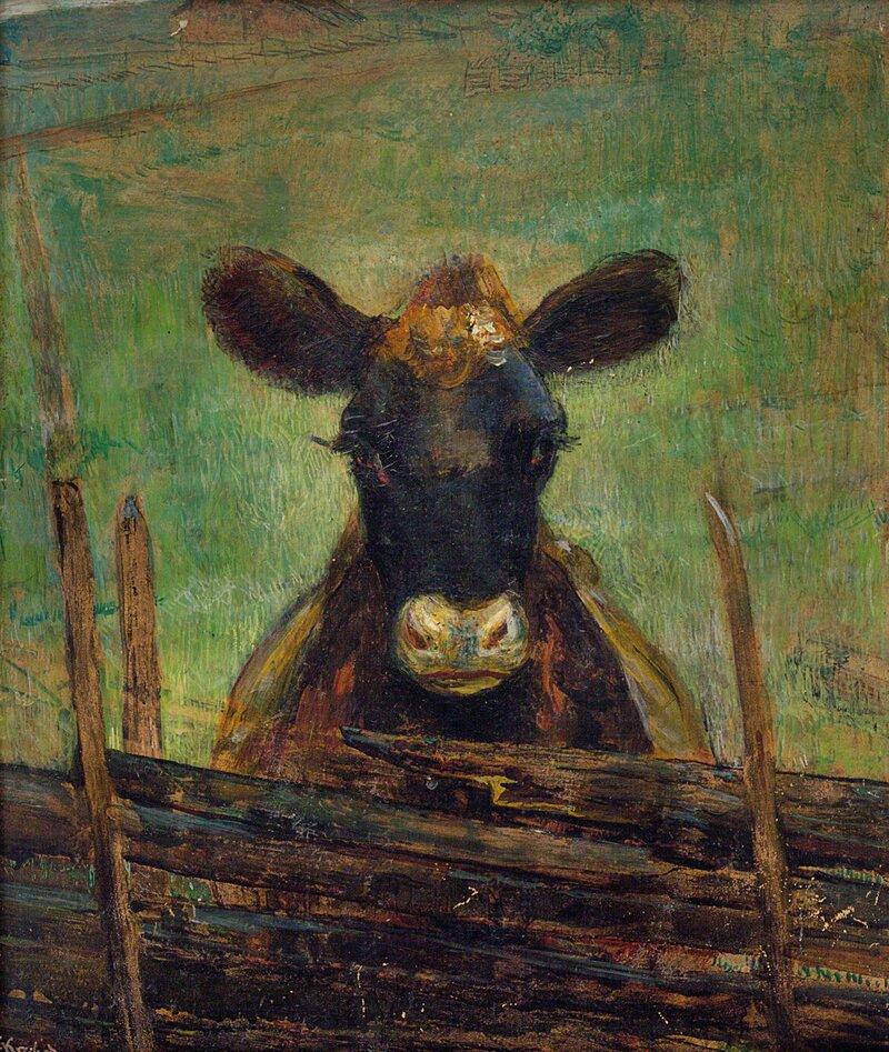 Portrett av en ku