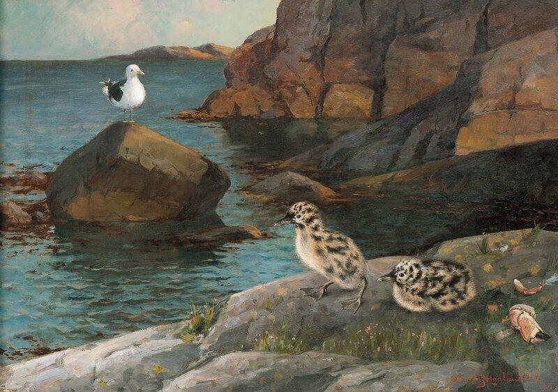 Måkunger 1904