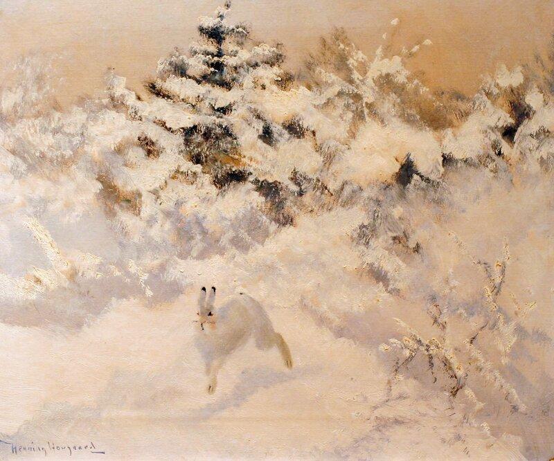 Hare i vinterlandskap