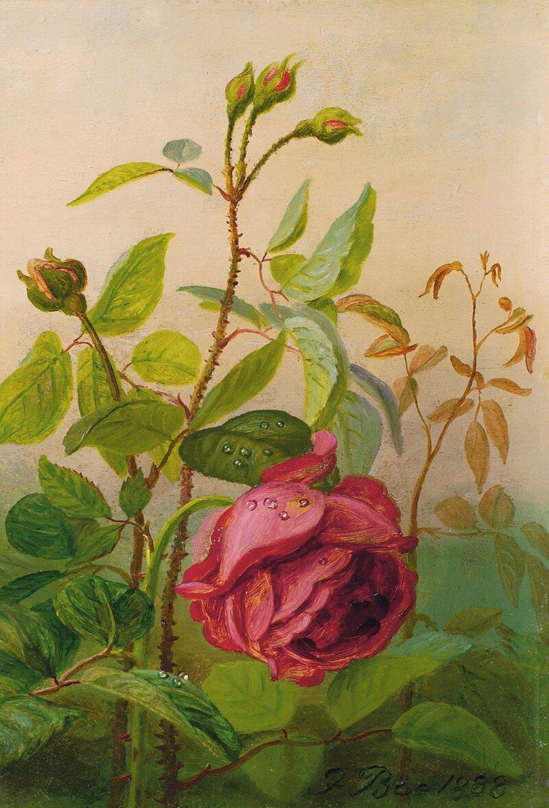 Rose 1888