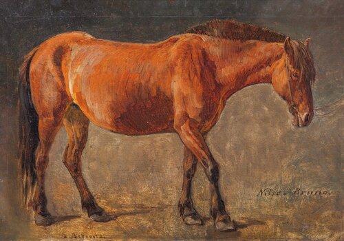 Hesten Nilse-Bruno