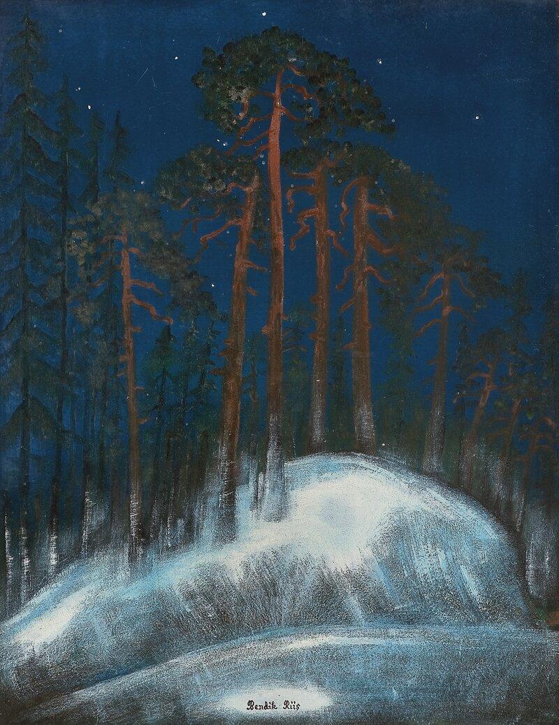 Stjernehimmel over furuskog, vinter